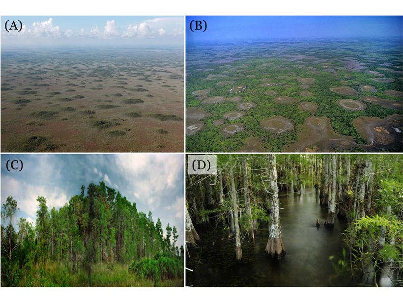 Four photographs of Big Cypress National Preserve of South Florida.