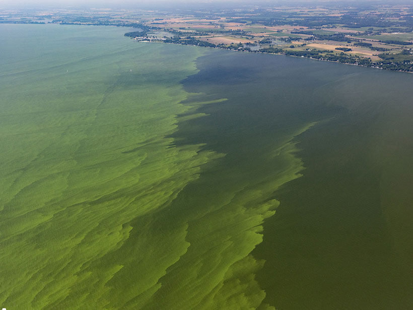 An aerial view of green algae mats near the western shore of Lake Erie