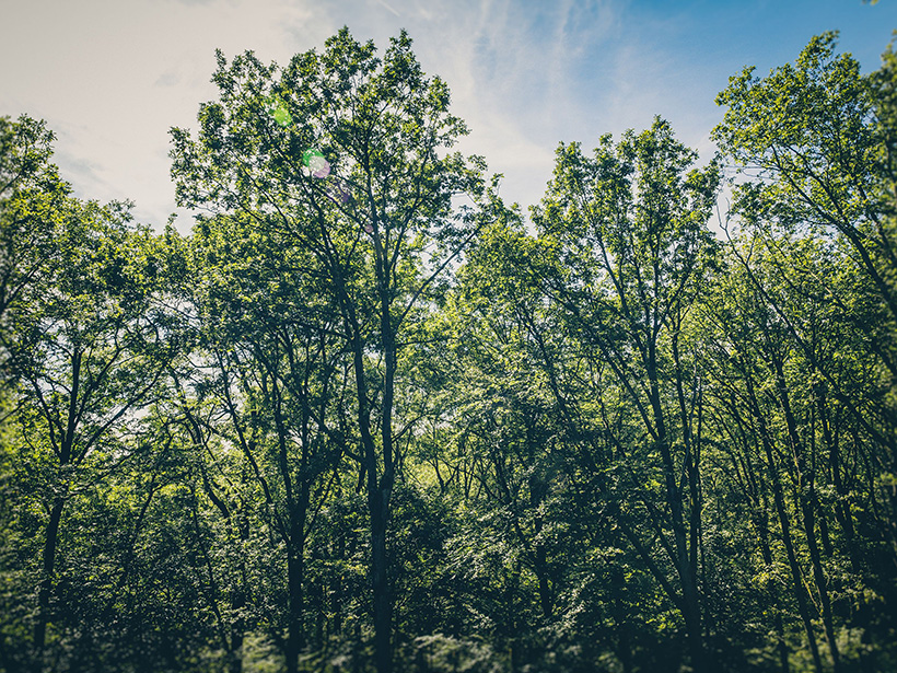 Deciduous forests, like the one pictured here, are important sinks of ozone.