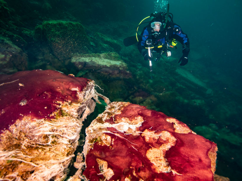 A diver approaches rocks covered with multicolored mats of bacteria.
