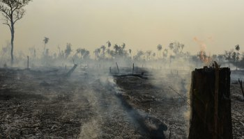A smoking clearing after a forest fire in Brazil.