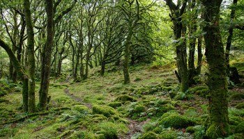 Green mossy forest
