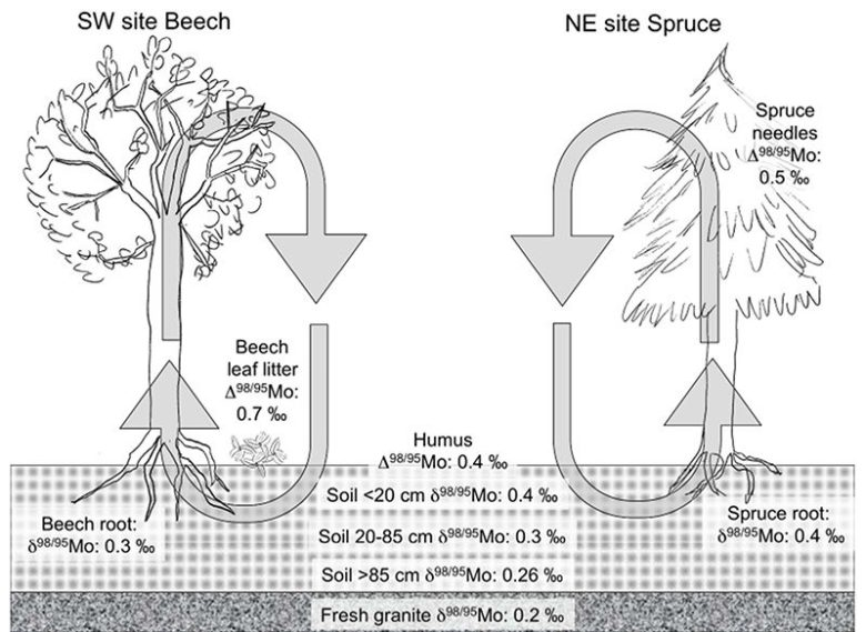 Graphic showing an example of how isotope analysis can be applied to elemental cycles.