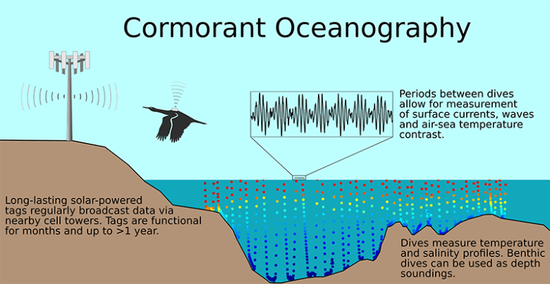 Diagram explaining use of two-way cellular communications with biologging tags on cormorants