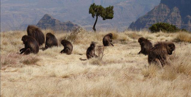 Resultado de imagen de etiopia