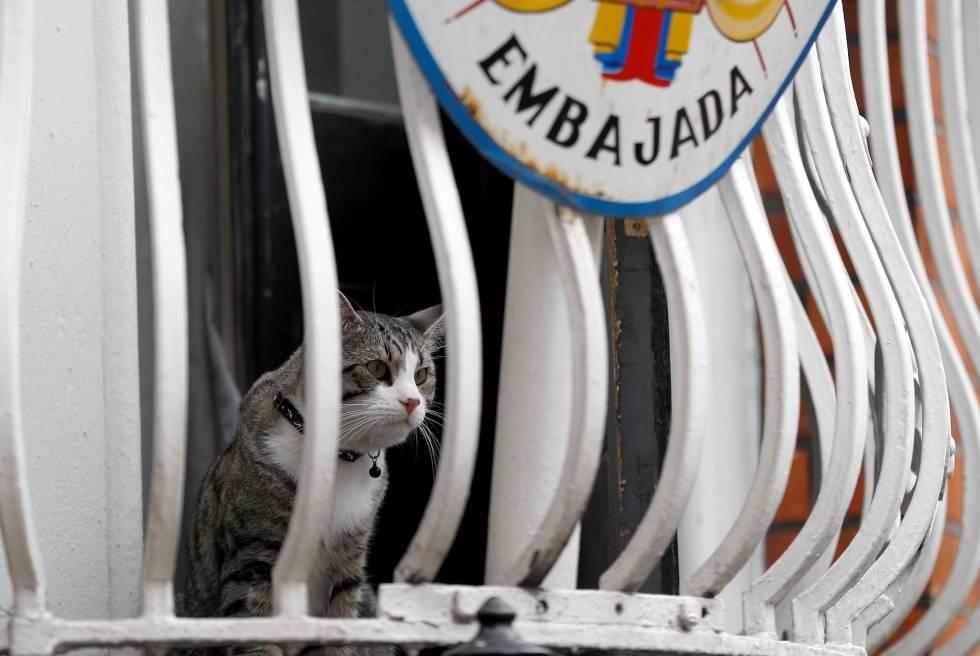 El gato de Julian Assange en el balcón de la Embajada de Ecuador en Londres (Reino Unido).