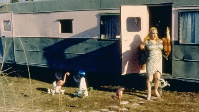 De qué va.  La hilarante rivalidad entre un criminal estrafalario (Divine), que vive en una caravana con su madre enferma mental y su hijo delincuente, y un matrimonio de perturbados por demostrar quién es el más inmundo del mundo.    La polémica.  Si de 'Pepi, Luci, Bom y otras chicas del montón', de Pedro Almodóvar, recordamos la lluvia dorada que Alaska descarga por indicación de Carmen Maura, del transgresor filme del rey del mal gusto John Waters nos quedamos con Divine zampándose la caca de un caniche. No es la única escena desagradable de 'Pink Flamingos' (1972). Otros grandes ejemplos del estilo 'trash' son el primer plano de un ano parlante cuyo propietario jamás fue desvelado (Santiago Segura le haría un particular homenaje en 'Torrente') y la escena de sexo con las gallinas (de la que Danny Milles se arrepintió toda su vida). Escatológica, indecente, cutre… En todos sus pases en EE UU se regalaban bolsas para el vómito, algo que a John Waters le hacía especial ilusión, pues para él el sonido de las arcadas era el equivalente a una ovación. Divine nunca dejaría de recibir cajas llenas de heces de fans que creían que realmente era lo que comía.