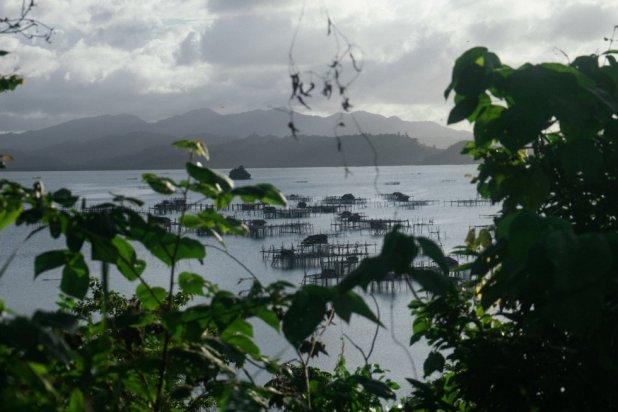 Cultivo de aguas en la costa de Palawan. Las actividades complementarias permiten mejorar los ingresos de los pescadores afectados por la creación de áreas marinas protegidas en el Triángulo de Coral.