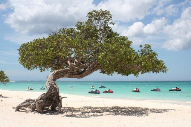 O Caribe também é o protagonista da praia de Eagle Beach, em Aruba, situada ao noroeste de Venezuela e quarta colocada no prêmio que concede o TripAdvisor na sua lista das 25 melhores praias do planeta.