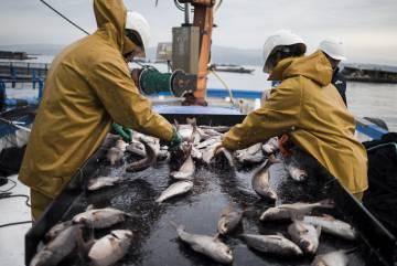 La pesquera que evitó morir gracias al 'sushi'