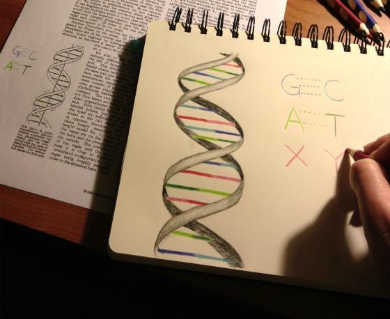 X e Y son las dos nuevas letras de ADN artificial