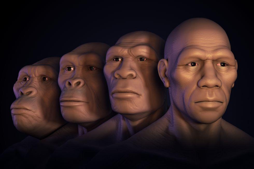 Reconstrucción de la cara de australopiteco, 'Homo habilis', 'Homo erectus' y 'Homo sapiens'