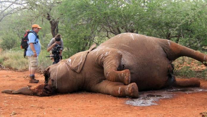 Resultado de imagem para matança elefantes