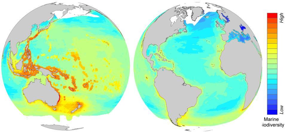 El mapa muestra las regiones con mayor riqueza de especies, en rojo, y las que tienen menos biodiversidad.