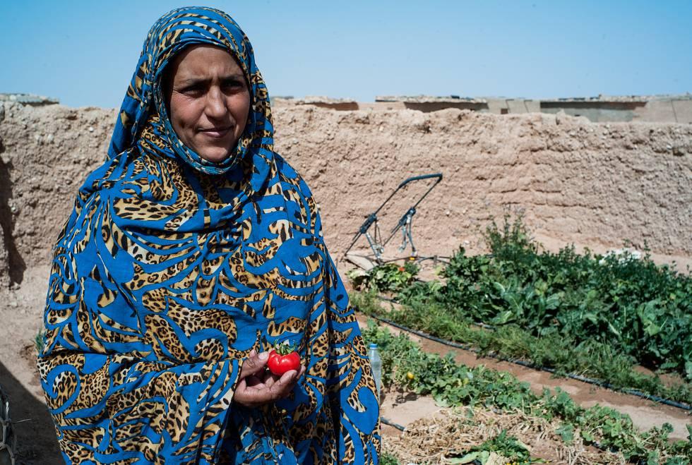 Salelkha Ahmad sujeta un tomate que ha nacido en su pequeño huerto de 10x10 metros.