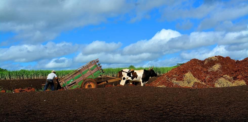 Un agricultor prepara la tierra para plantar caña de azúcar en Arroyos y Esteros.