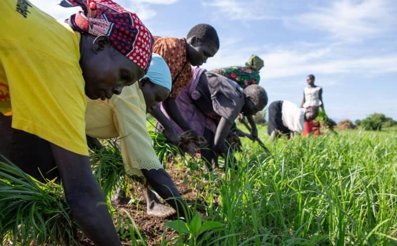 Agricultores trabajando en Torit (Sudán del Sur).