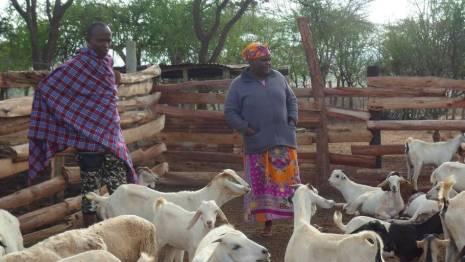 En los países en desarrollo (como Kenia, en la foto), la cría de ganado es una importante fuente de alimento e ingresos para muchos agricultores y pastores de granjas pequeñas.
