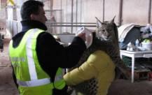Un agente de la Guardia Civil en una operación contra el maltrato animal.