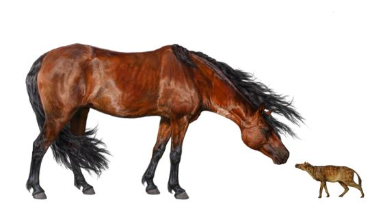 Modern and Prehistoric Horses