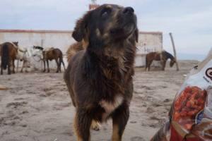 perro coquimbo 2