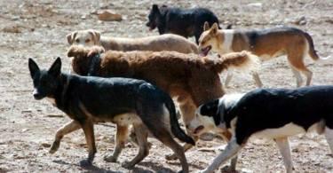 perros-grupo