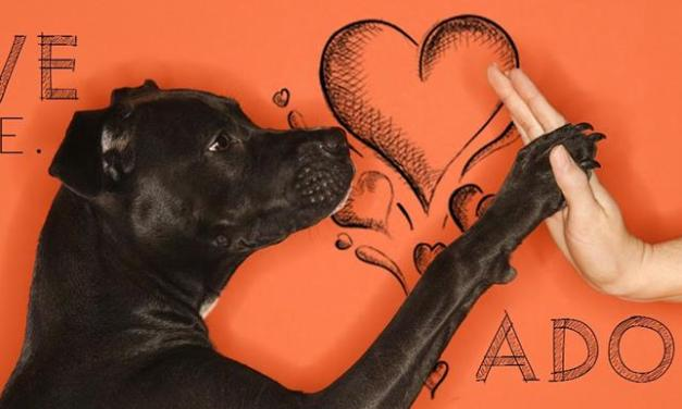 Lamar County Humane Association to host adoption event today