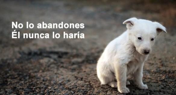 Campaña concienciación contra el abandono de mascotas