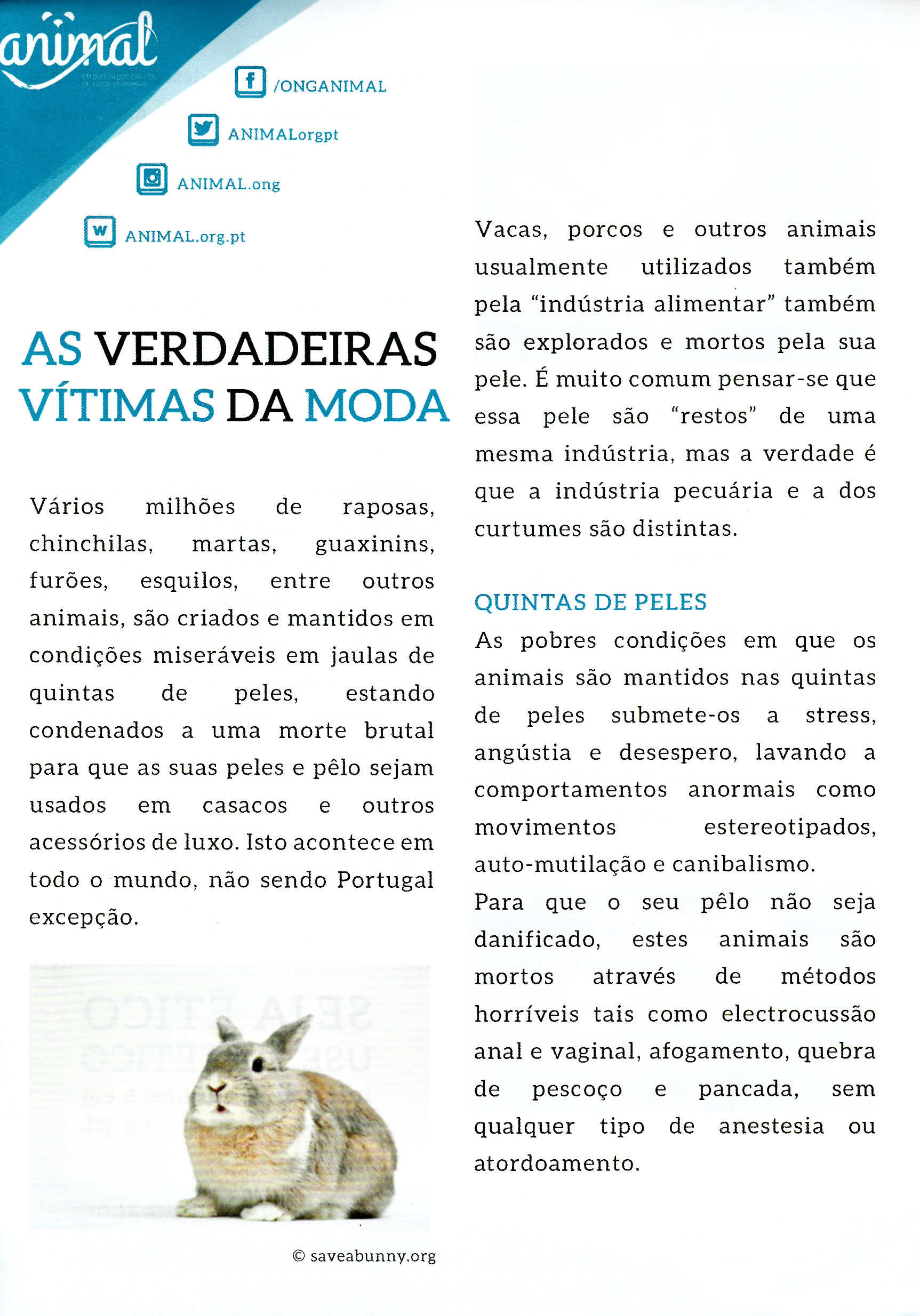 Animal_0007