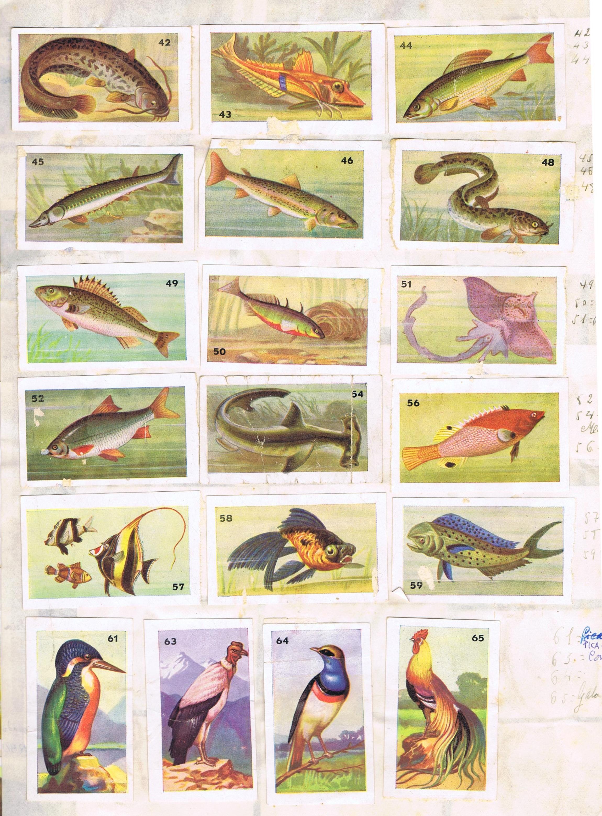 atlas de zoologia 4