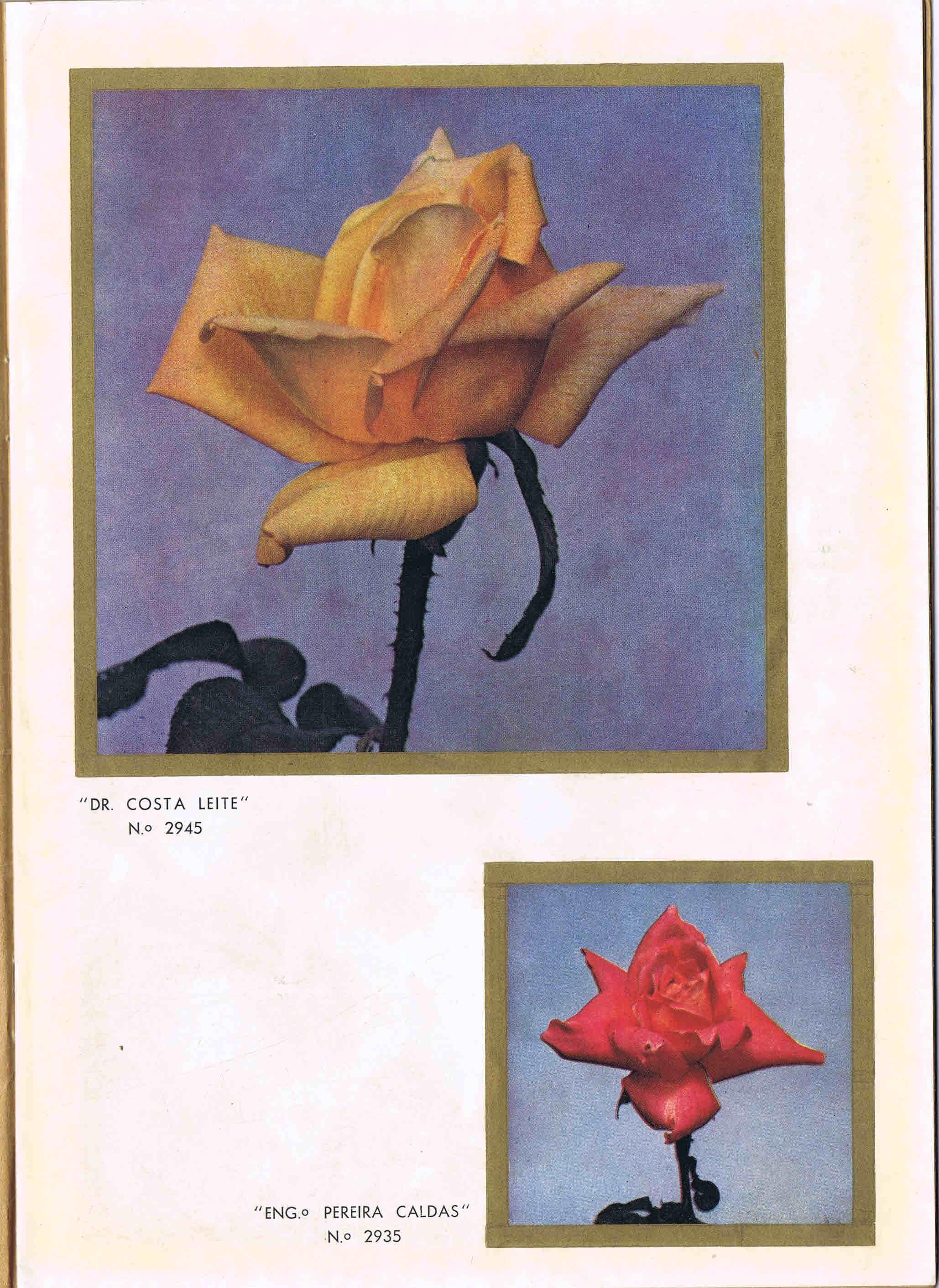 CATALOGO HORTICOLA MOREIRA DA SILVA & Fos Lda nº 90 1955-1956 4