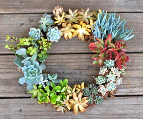 Tuesday Tute ~ Living Succulent Wreath