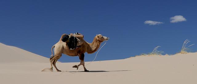 camel-692648_640