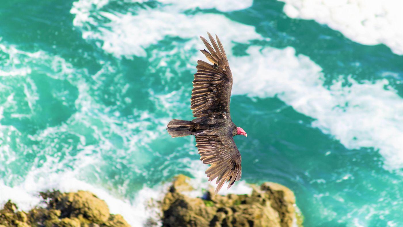 costa mar norte chile sur de peru pajaros aves oceano pacifico ave pajaros