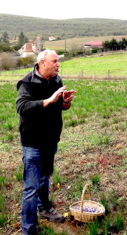 devant un champ de safran