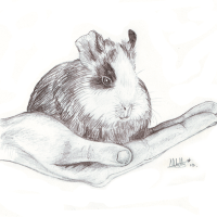 Sunday Sketch #6: A Pig in the Hand...