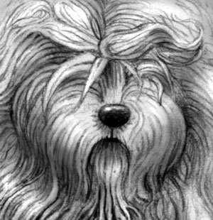 Old English Sheepdog - Detail view of pencil drawing by Amy Letts