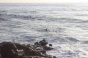 Bonotti, quer dizer, foca se aproximando.