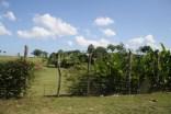 Jamaica 2012 120