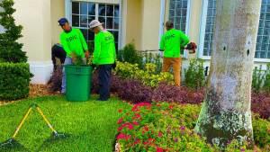 lawn-services-3