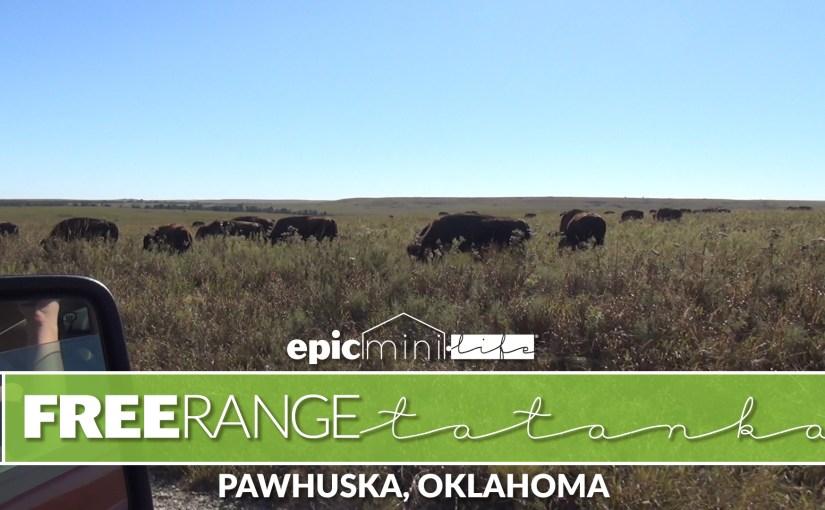 Free Range Tatanka – Epic Mini Life S1E5