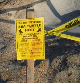 Sea Turtle Nest signage - Amelia Island