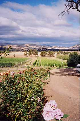 Tasmanian vineyards