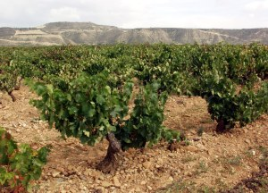 Finca Valpiedra vineyard