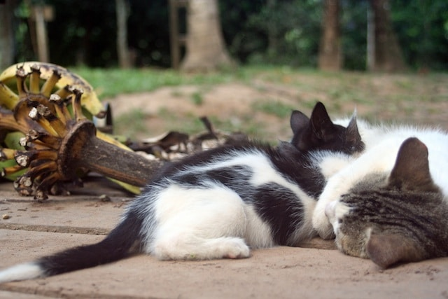 kittens on the farm