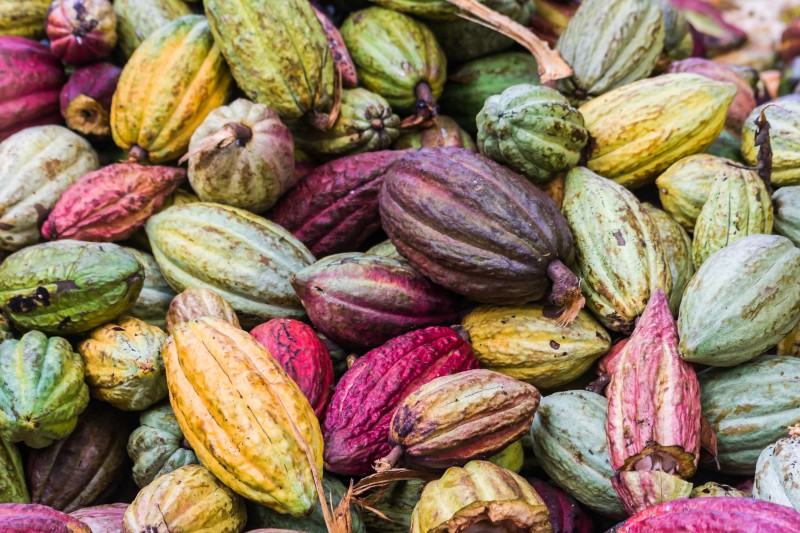 Cocoa pods. Photo courtesy of Pierre-Yves Babelon via Shutterstock.