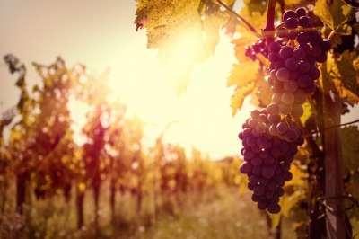 wine regions