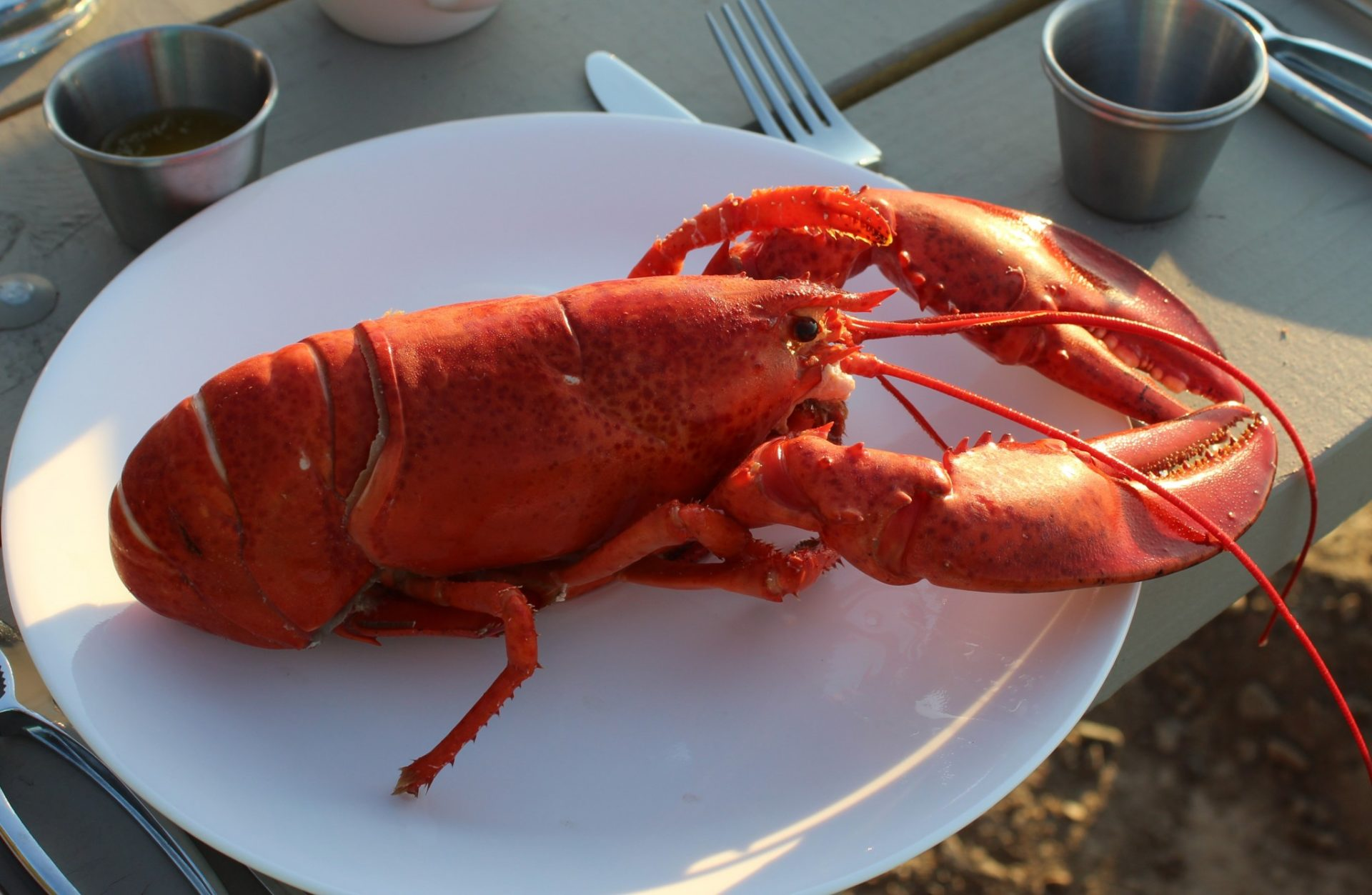 Why Cape Breton Island Has the Most Delicious Lobster In ...