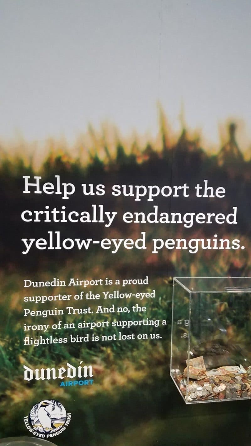 new zealand wildlife conservation efforts