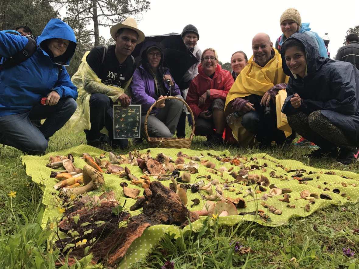 Oaxaca travel mushroom foraging